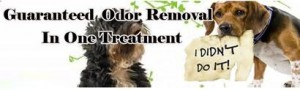 Guaranteed ODOR removal