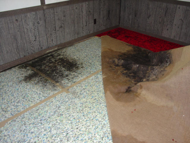 Image result for water damage to carpet