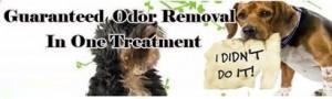 Guaranteed ODOR removal